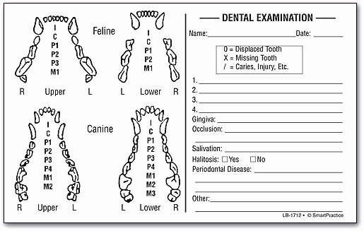 Canine Dental Chart Template Lovely List Of Synonyms and Antonyms Of the Word K 9 Dental Chart