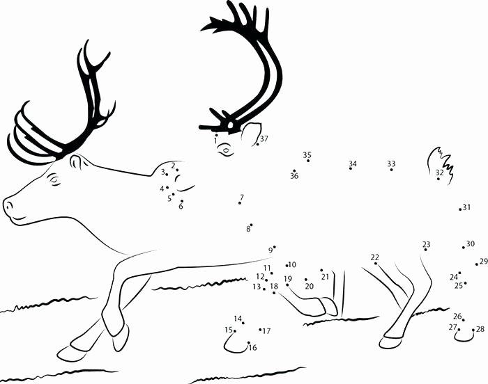 Deer Antler Printable Template Fresh Free Printable Coloring Pages Reindeer Page Regarding