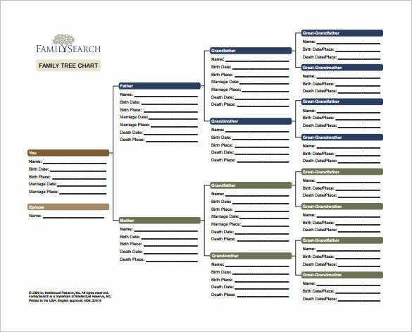 Descendant Chart Template Excel Elegant Family Tree Template Excel