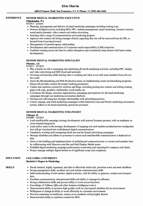 Digital Marketing Resume Template Lovely Senior Digital Marketing Resume Samples