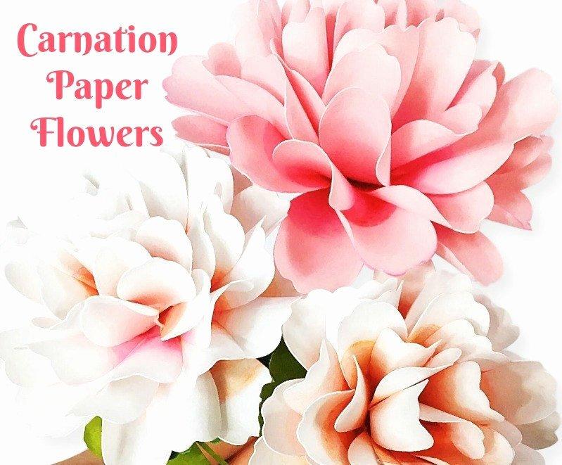Diy Paper Flower Template Lovely Carnation Style Paper Flowers Diy Paper Flower Templates
