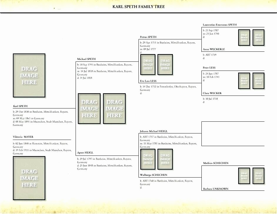 sample family history book template our family tree book example template templates definition in java