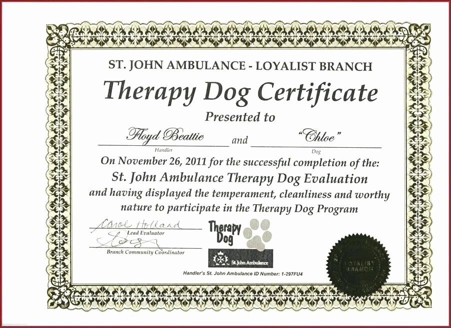 Google Doc Certificate Template Lovely Certificate Templates Service Dog Template Designs to