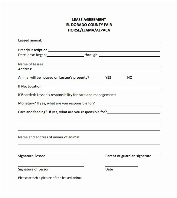 Horse Lease Agreements Template Lovely 10 Horse Lease Agreement Templates