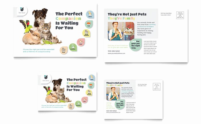 In Design Postcard Template Beautiful Pet Store Postcard Template Word & Publisher