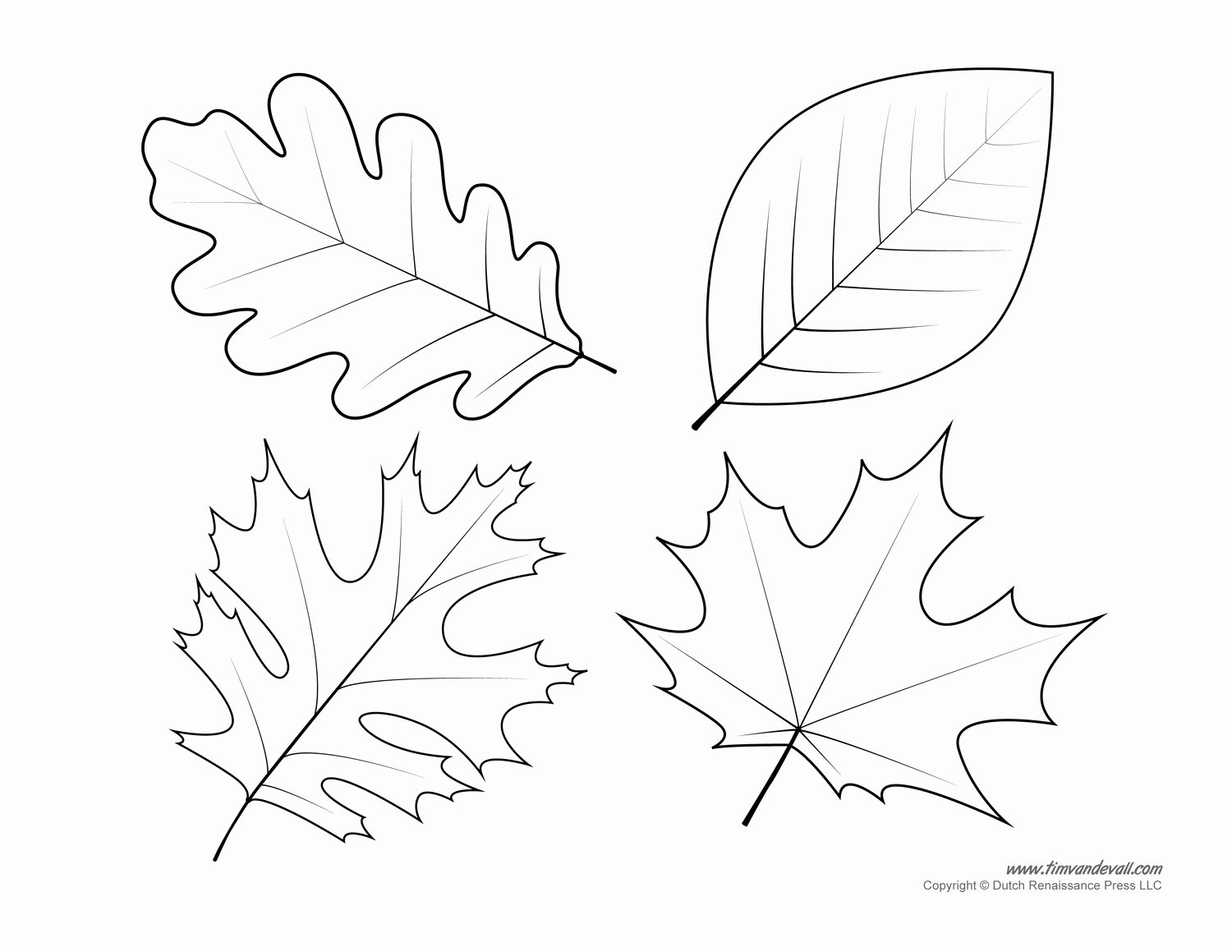 Leaf Template with Lines Awesome Template Leaf Template Leaf Template
