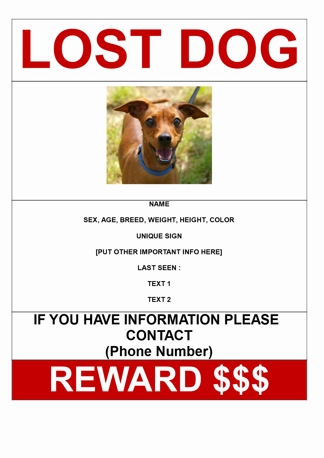Lost Cat Flyer Template Beautiful Free Missing Dog Poster with Reward A3 Size