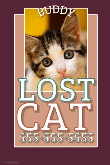 Lost Cat Flyer Template Fresh Lost Cat Template
