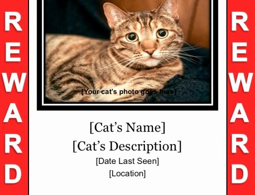 Lost Cat Flyer Template Inspirational Lost Cat Flyer & Poster Templates Free Downloads