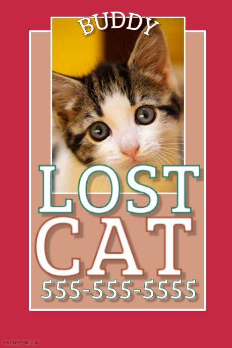 Lost Cat Flyer Template Lovely Lost Cat Template