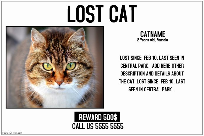 Lost Cat Poster Template Fresh Lost Cat Lost Pet Landscape Poster Template
