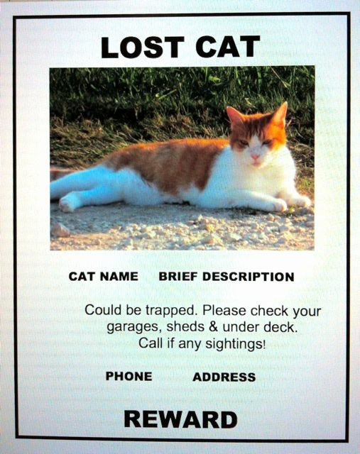 Lost Cat Poster Template Lovely Lost Cat Finder Pet Detective Lost Cat Poster Example
