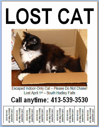 Lost Cat Poster Template New Flyer Design & Templates Lost Pet Research & Recovery