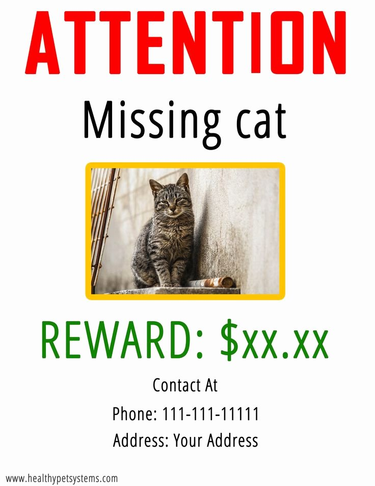 Lost Cat Posters Template Awesome 25 Best Ideas About Lost Cat Poster On Pinterest
