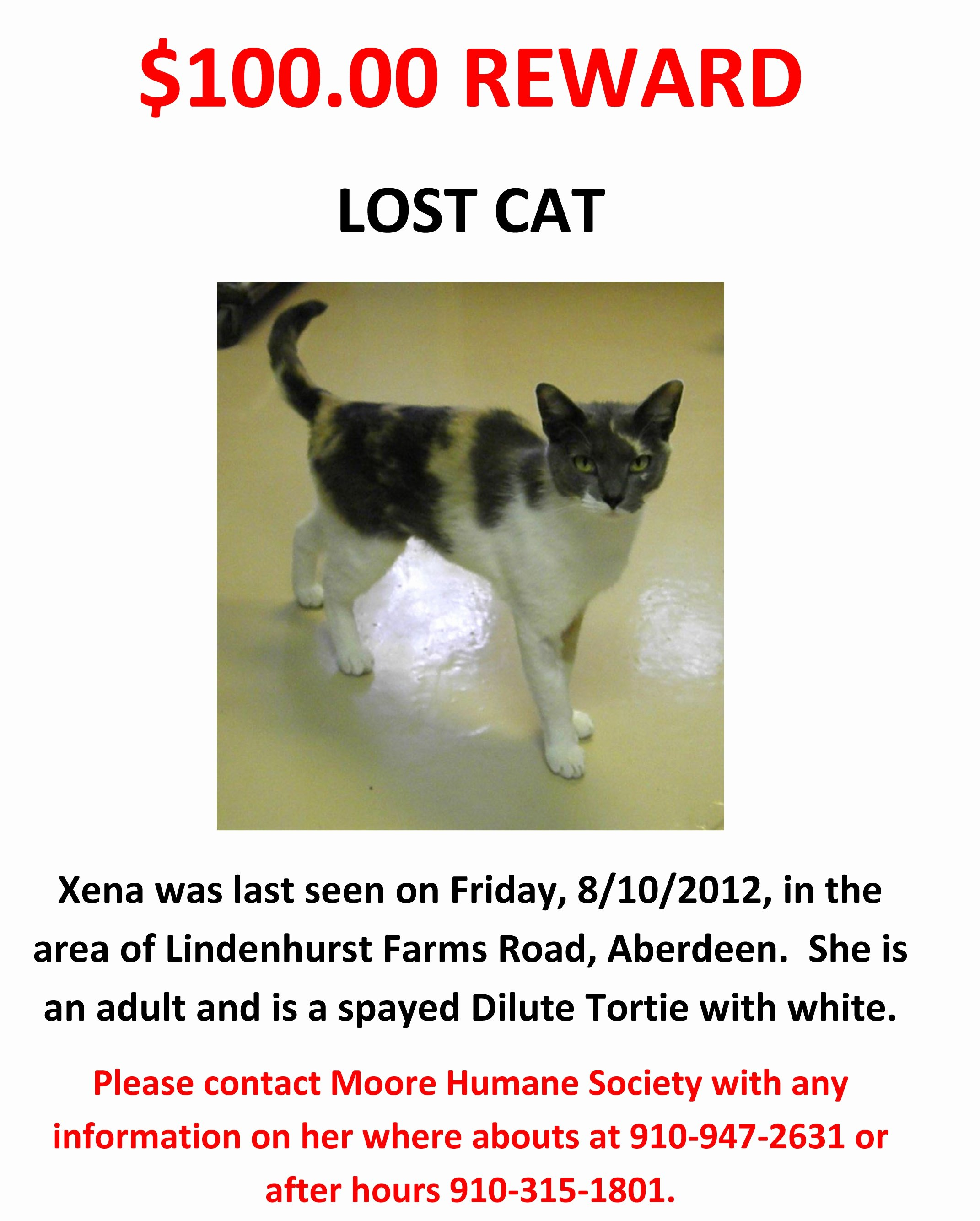 Lost Cat Posters Template Awesome Missing Cat Flyer Template Best Design Missing