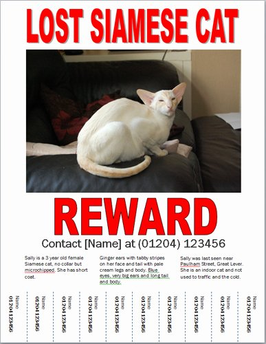 Lost Cat Posters Template Awesome Missing Cat Poster How to Make A Lost Cat Poster