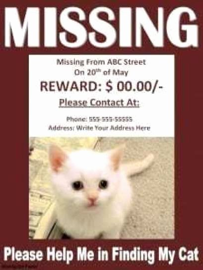 Lost Cat Posters Template Beautiful 21 Free Missing Cat Poster Template Word Excel formats