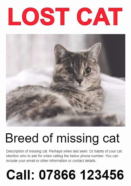 Lost Cat Posters Template Lovely 25 Best Ideas About Missing Cat Poster On Pinterest