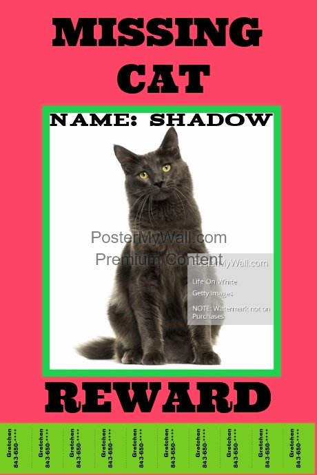 Lost Cat Posters Template Lovely Missing Pet Template