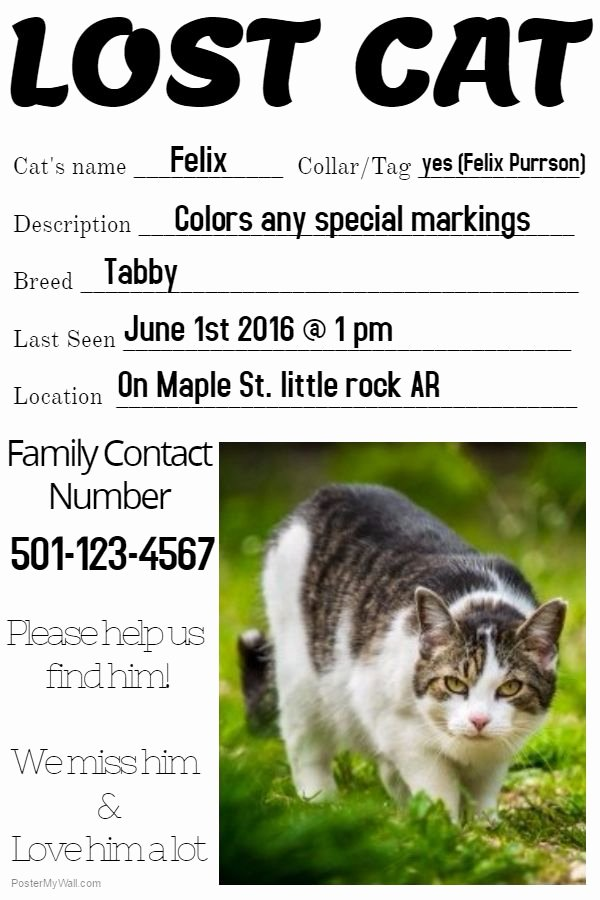 Lost Cat Posters Template New 12 Best Lost Pet and Pet Adoption Flyers Images On