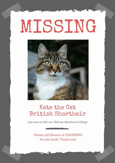 Lost Cat Posters Template Unique Design Templates Canva