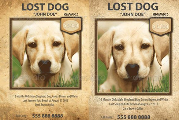 Lost Dog Flyer Template Beautiful 12 Psd Lost Dog Flyer Templates