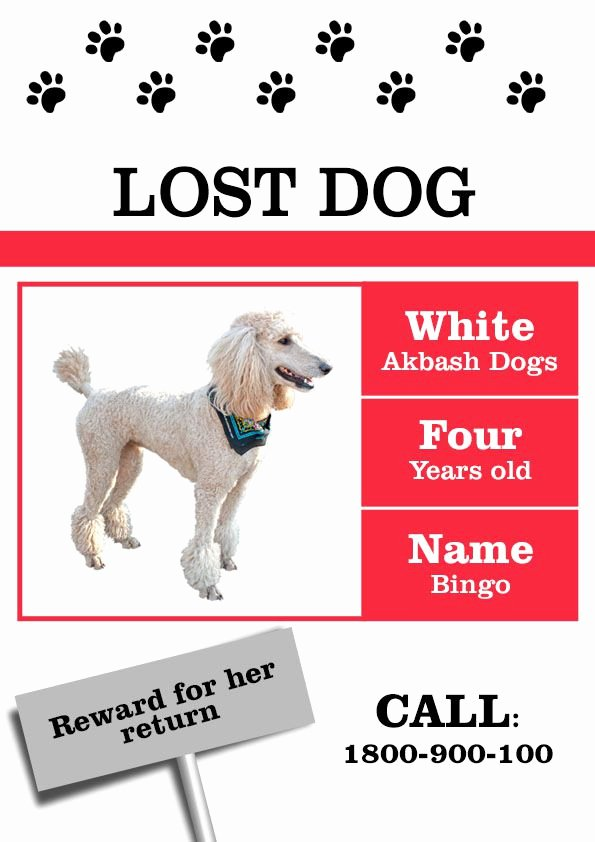 Lost Dog Flyer Template New 20 Best Lost Dog Flyer Templates Demplates