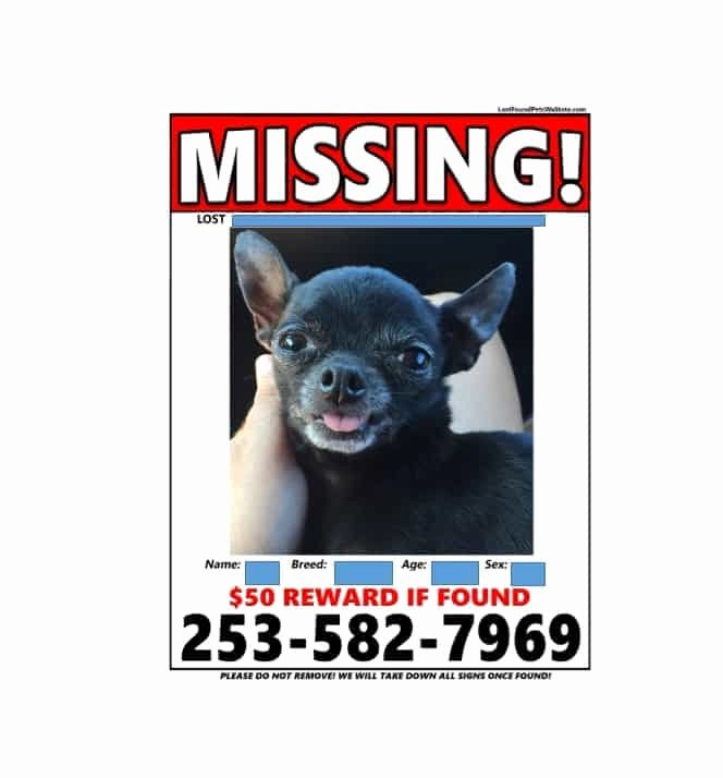 Lost Dog Flyers Template Beautiful 40 Lost Pet Flyers [missing Cat Dog Poster] Template