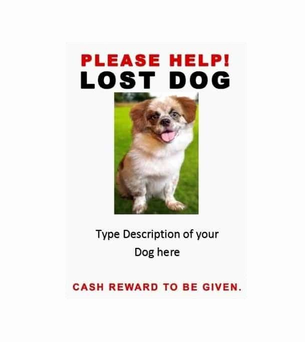 Lost Dog Flyers Template Luxury 40 Lost Pet Flyers [missing Cat Dog Poster] Template