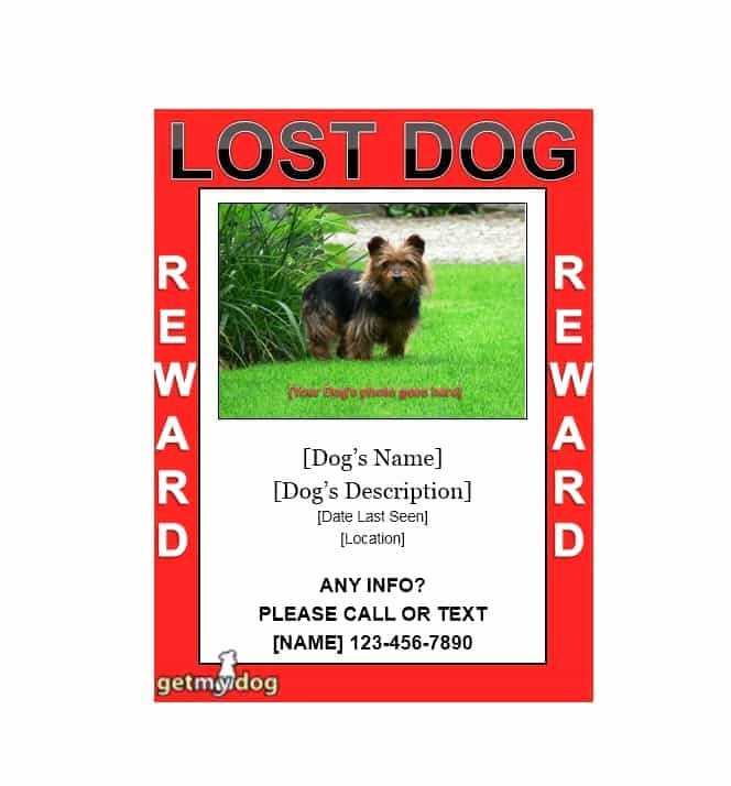 Lost Dog Poster Template Elegant 40 Lost Pet Flyers [missing Cat Dog Poster] Template