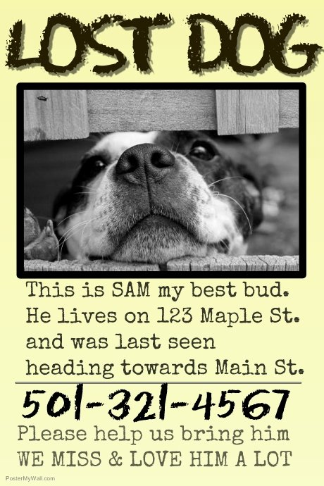 Lost Dog Poster Template Fresh Copy Of Missing Pet Lost Dog Cat Family