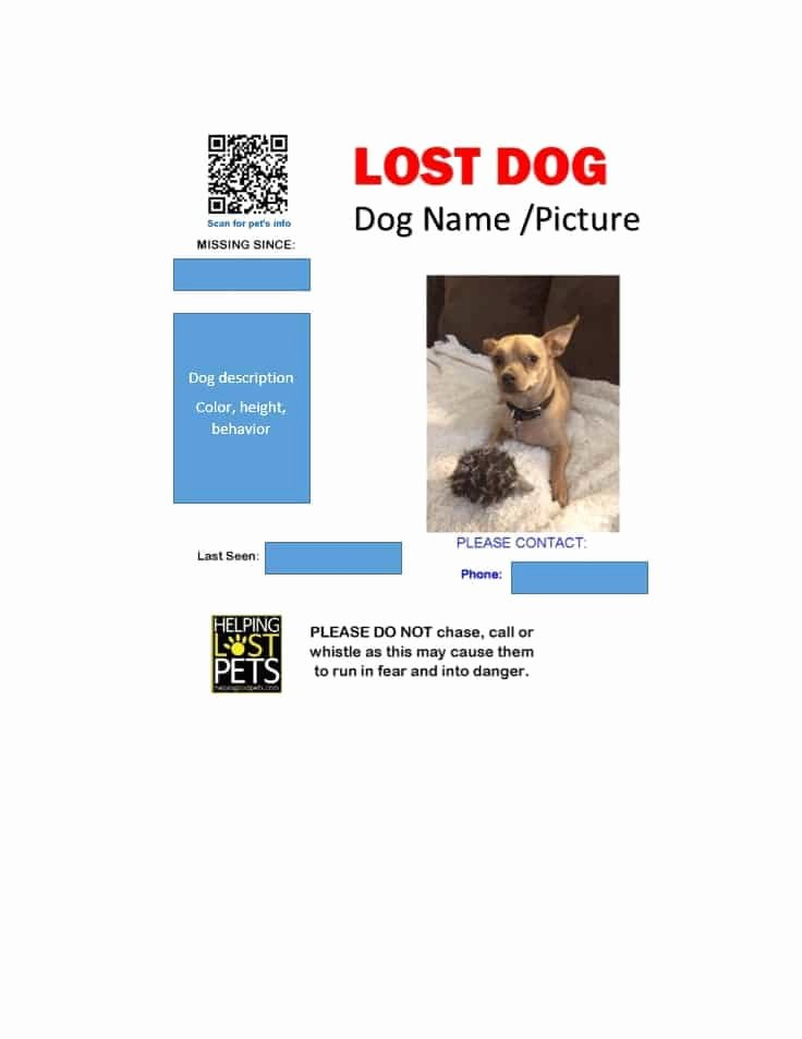 Lost Dog Poster Template Inspirational 40 Lost Pet Flyers [missing Cat Dog Poster] Template