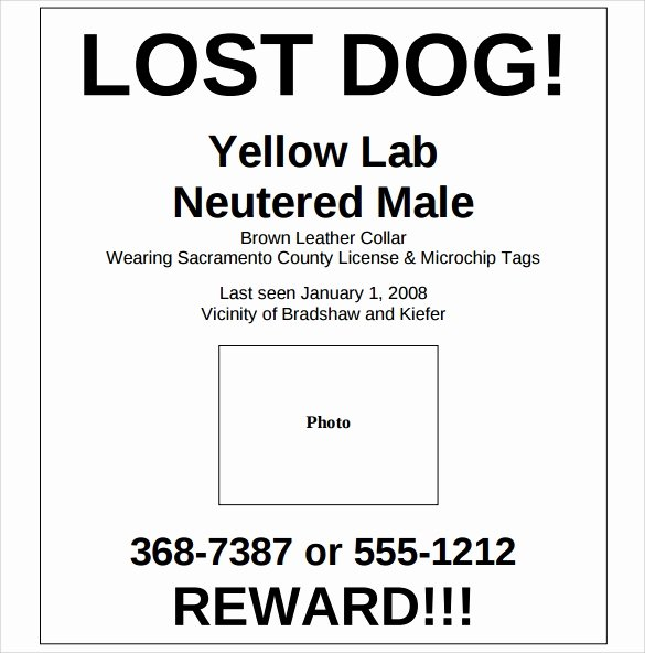 Lost Dog Poster Template Inspirational 8 Lost Dog Flyer Templates