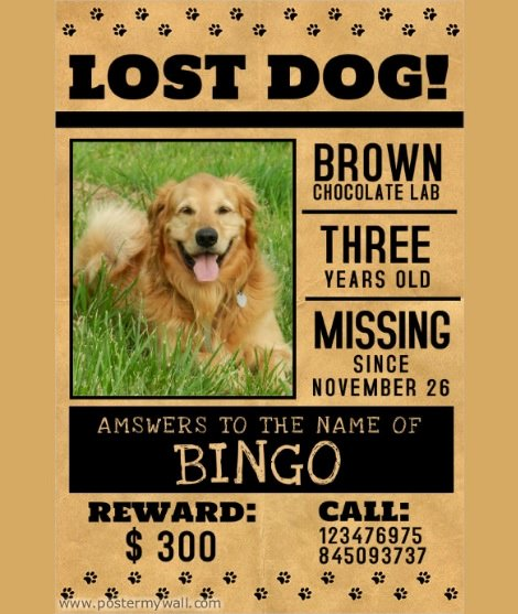 Lost Dog Poster Template Lovely 10 Missing Lost Pet Poster Templates
