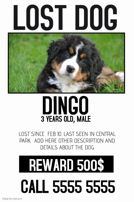 Lost Dog Poster Template Lovely Lost Dog Lost Pet Color Poster Template
