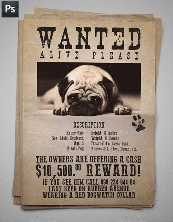 Lost Pet Flyer Template Awesome 8 Lost Dog Flyer Templates