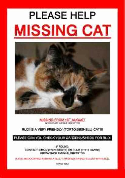 Lost Pet Flyer Template Inspirational 21 Free Missing Cat Poster Template Word Excel formats