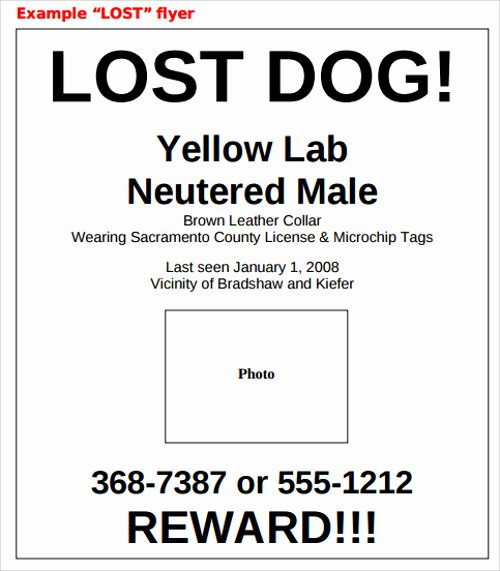 Lost Pet Flyer Template Lovely Lost Dog Flyer Template 7 Download Documents In Vector