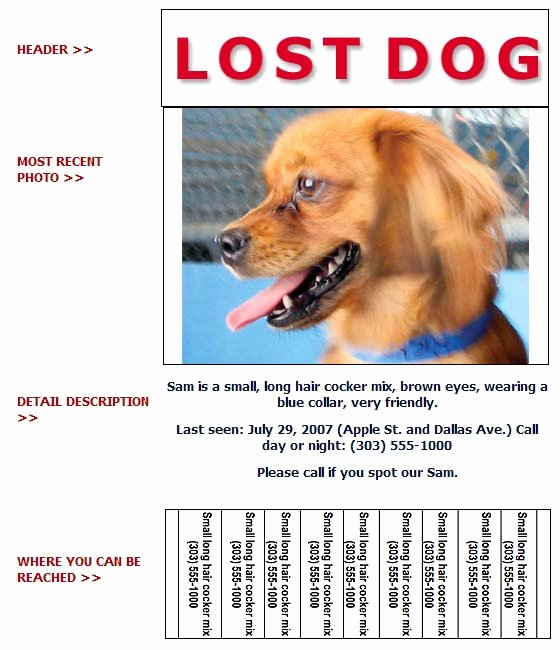 Lost Pet Poster Template Elegant Lost and Found Dog Flyer Humane society Of Broward