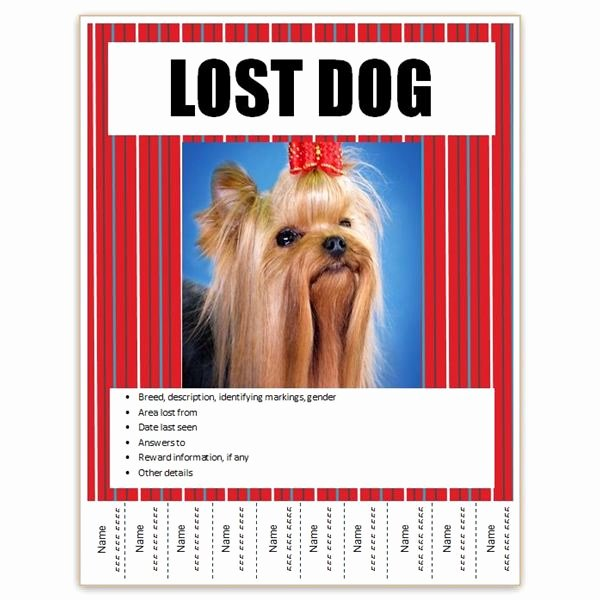 Lost Pet Poster Template Inspirational Find Free Flyer Templates for Word 10 Excellent Options