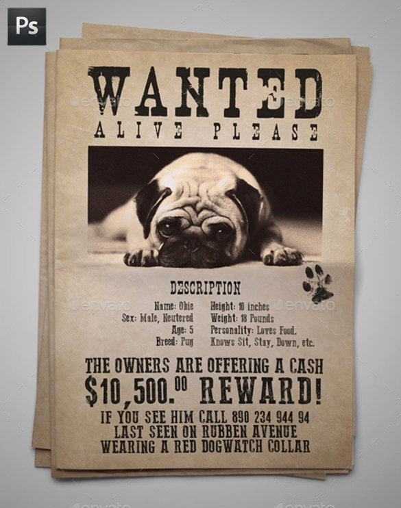Lost Pet Poster Template New 20 Lost Pet Flyers Word Psd Ai Vector Eps