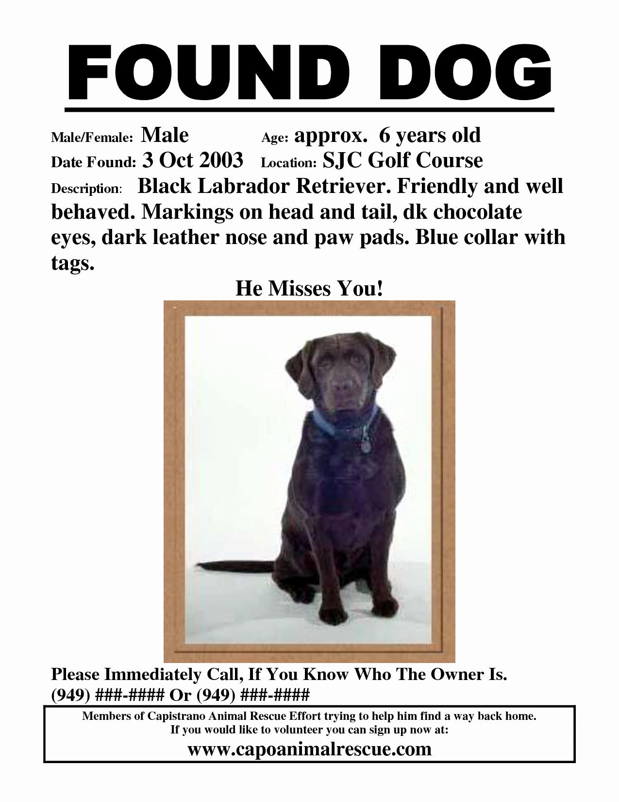 Missing Dog Flyer Template Fresh Found Dog Poster Template Portablegasgrillweber