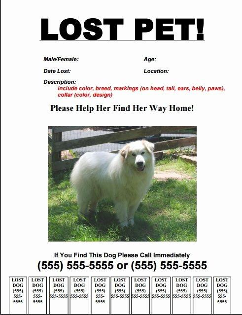 Missing Dog Flyer Template Inspirational 20 Best Lost Dog Flyer Templates Demplates