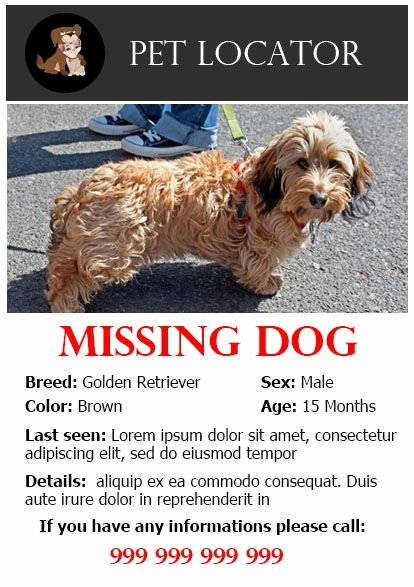 Missing Dog Poster Template Best Of 20 Best Lost Dog Flyer Templates Demplates