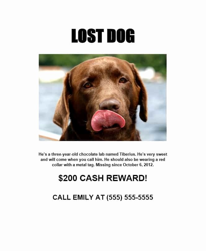 Missing Dog Poster Template Inspirational 40 Lost Pet Flyers [missing Cat Dog Poster] Template