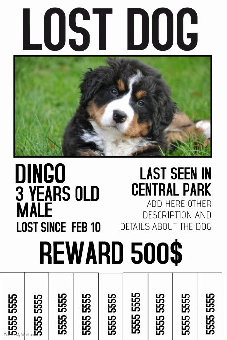 Missing Dog Poster Template Inspirational Lost Dog Lost Pet Color Poster Template