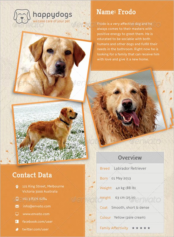 Missing Dog Poster Template New 12 Psd Lost Dog Flyer Templates