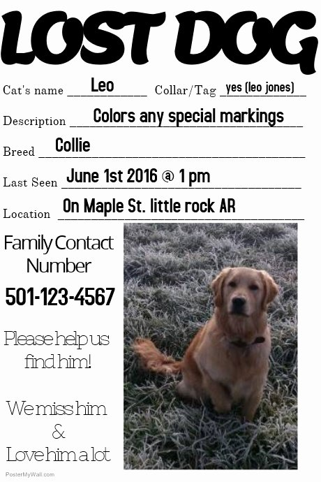 Missing Dog Poster Template New Lost Dog Missing Loved One Family Template