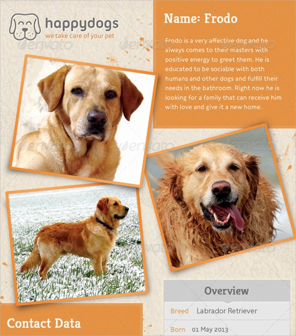Missing Pet Flyer Template Elegant 8 Lost Dog Flyer Templates