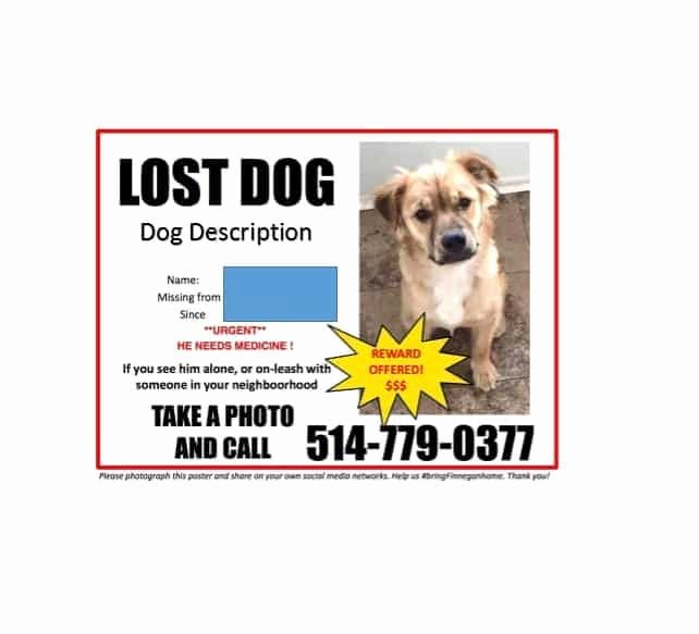 Missing Pet Poster Template Beautiful 40 Lost Pet Flyers [missing Cat Dog Poster] Template